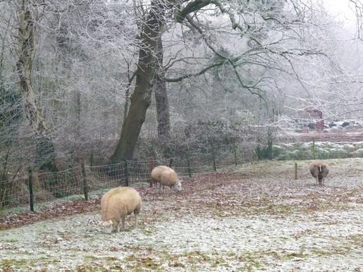 Edjo.nl | Achter kasteel Groeneveld 3